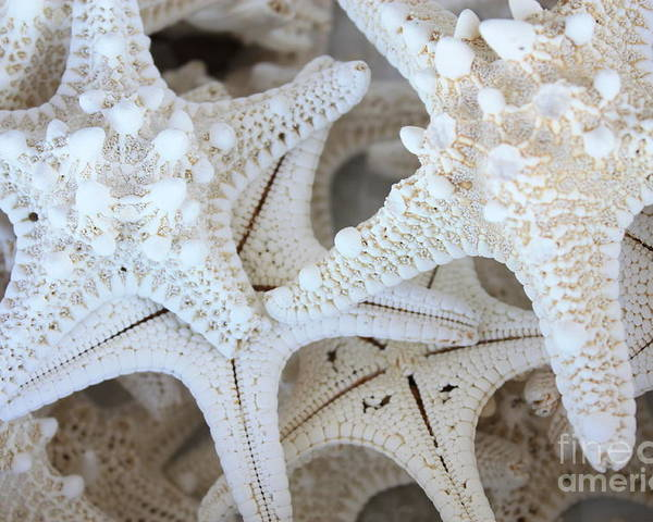 White Poster featuring the photograph White Starfish by Carol Groenen