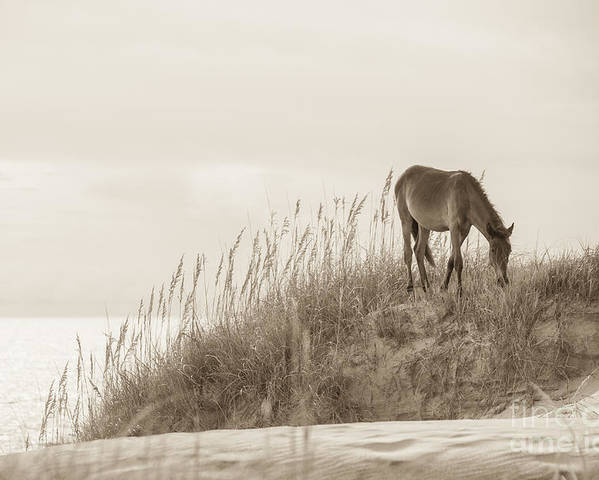 Horse Poster featuring the photograph Wild Horse On The Outer Banks by Diane Diederich