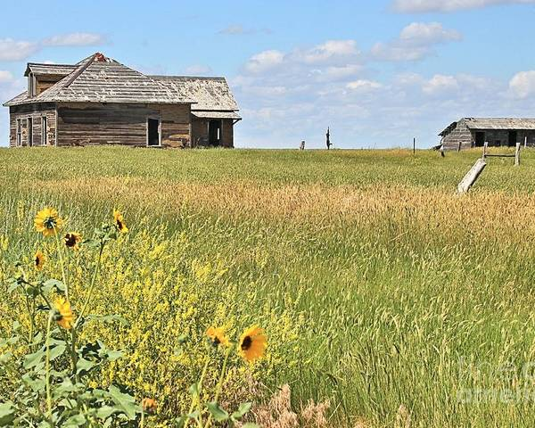Old Building Poster featuring the photograph Wild Sunflowers by Carole Martinez
