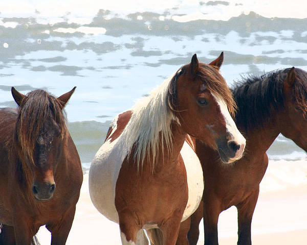 Assateague Poster featuring the photograph Wild Trio by JB Stran