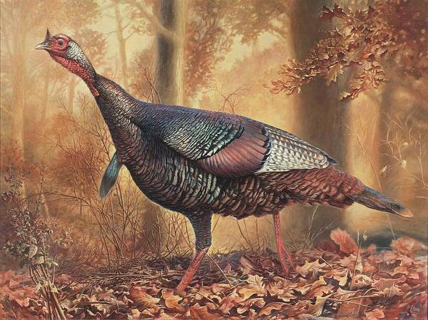 Wild Turkey Poster featuring the painting Wild Turkey by Hans Droog
