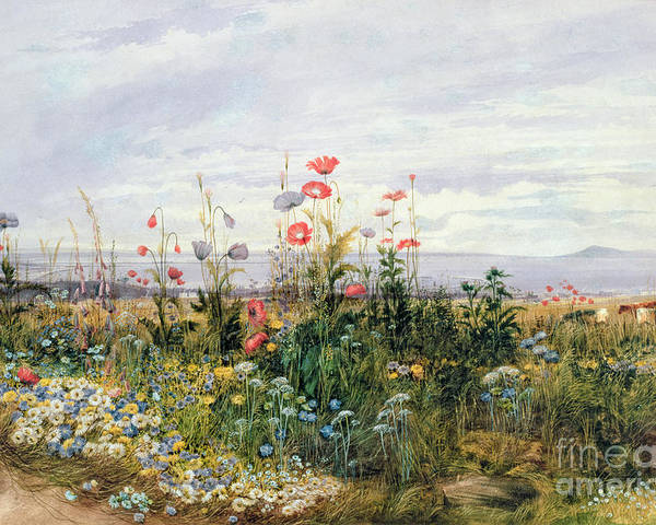 Meadow; Flowers; Irish; Wild; Landscape; Poppies Poster featuring the painting Wildflowers With A View Of Dublin Dunleary by A Nicholl