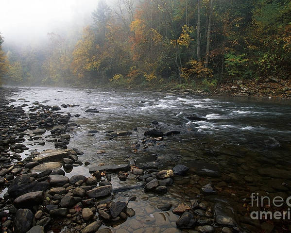 Williams River Poster featuring the photograph Williams River Autumn Mist by Thomas R Fletcher