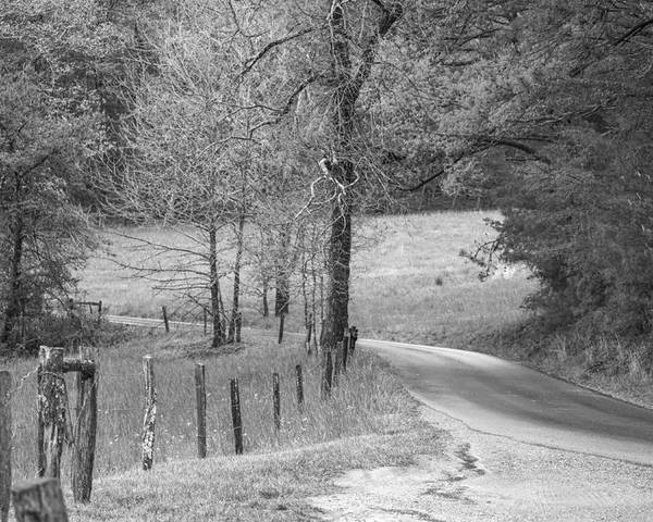 Sherri Duncan Poster featuring the photograph Winding Road In Wilderness Black And White by Sherri Duncan