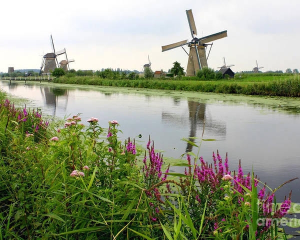 Windmill Poster featuring the photograph Windmills Of Kinderdijk With Wildflowers by Carol Groenen