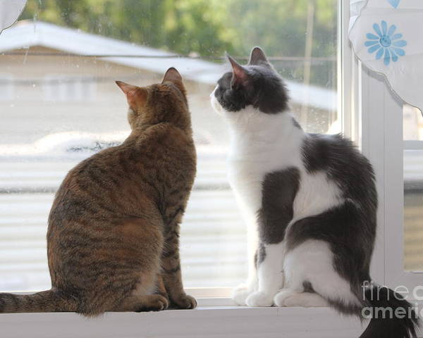 Cat Poster featuring the photograph Window Cats by Michelle Powell