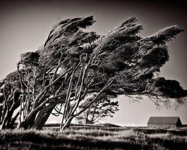Windswept Trees Poster featuring the photograph Windswept by Dave Bowman