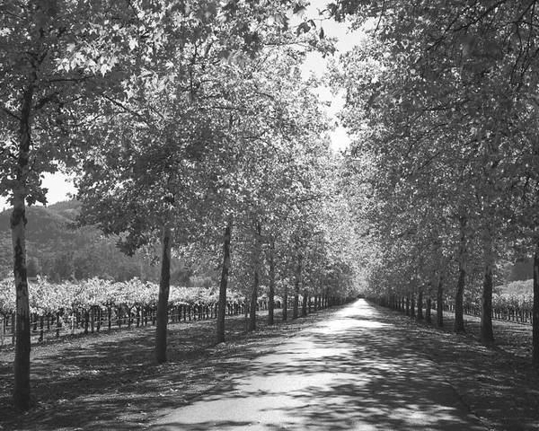 Black And White Poster featuring the photograph Wine Country Napa Black And White by Suzanne Gaff