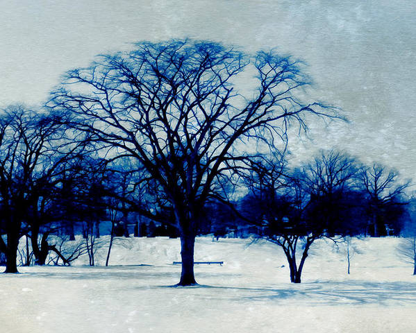 Blue And White Poster featuring the photograph Winter Blues by Shawna Rowe