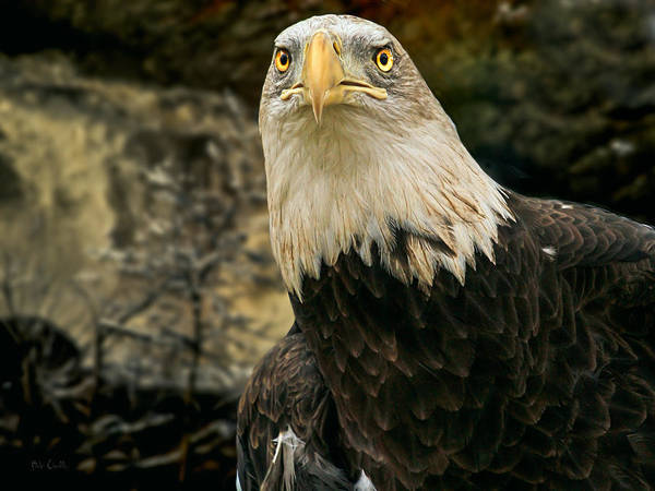Eagle Poster featuring the photograph Winter Eagle by Bob Orsillo