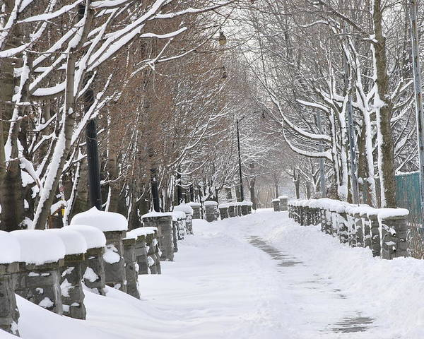 Winter Poster featuring the photograph Winter by Frederico Borges