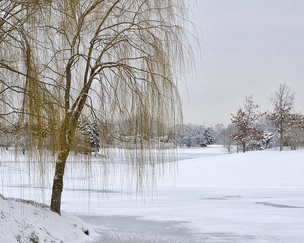 Winter Scene Poster featuring the photograph Winter Landscape by Julie Palencia