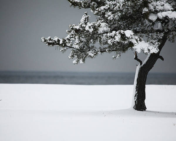Winter Poster featuring the photograph Winter Quiet by Karol Livote