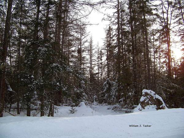 Trees Poster featuring the photograph Winter Quiet by William Tasker