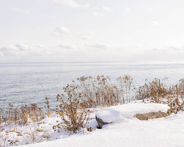Plants Poster featuring the photograph Winter Shore Of Lake Ontario by Elena Elisseeva