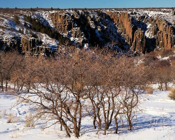 Black Canyon Of The Gunnison Poster featuring the photograph Winter Sprouts by Adam Jewell