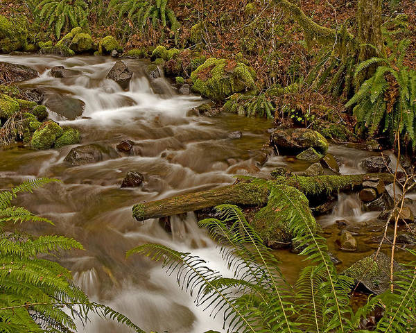 Pacific Poster featuring the photograph Winter Stream by Nick Boren