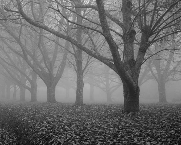 Autumn Poster featuring the photograph Winter Trees In The Mist by Georgia Fowler