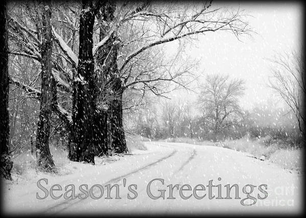 Seasonal Poster featuring the photograph Winter White Season's Greeting Card by Carol Groenen