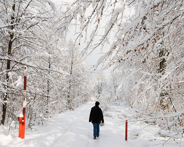 Winter Poster featuring the photograph Winterly Forest With Snow Covered Trees by Matthias Hauser