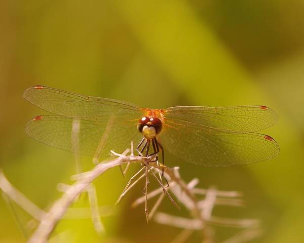 Nature Poster featuring the photograph With Landing Gear Down by Jeff Swan
