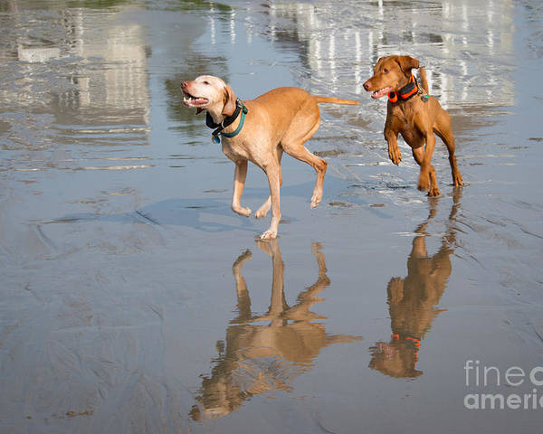 Dog Poster featuring the photograph Woo Hoo - It's A Beach Day by Mary Koenig Godfrey
