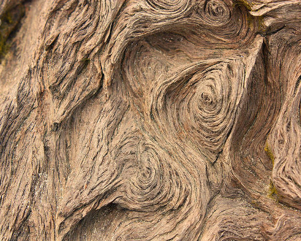 Wood Poster featuring the photograph Wood Swirls by Nicole Doering