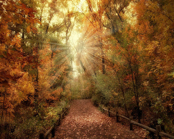 Autumn Poster featuring the photograph Woodland Light by Jessica Jenney