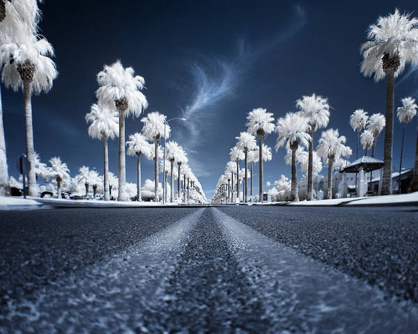 Infrared Poster featuring the photograph X by Sean Foster