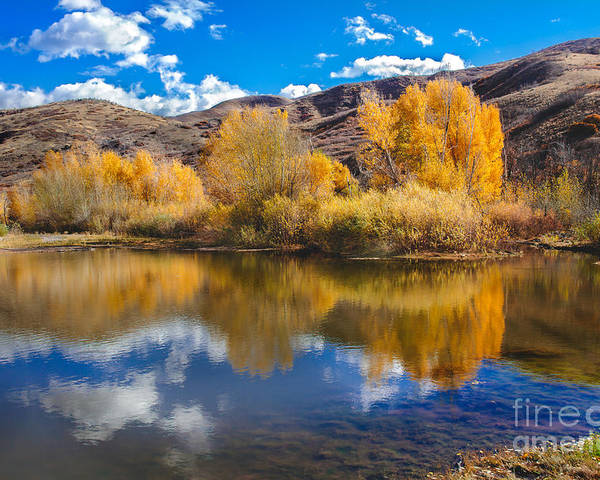 Yellow Poster featuring the photograph Yellow Fall Reflections by Robert Bales