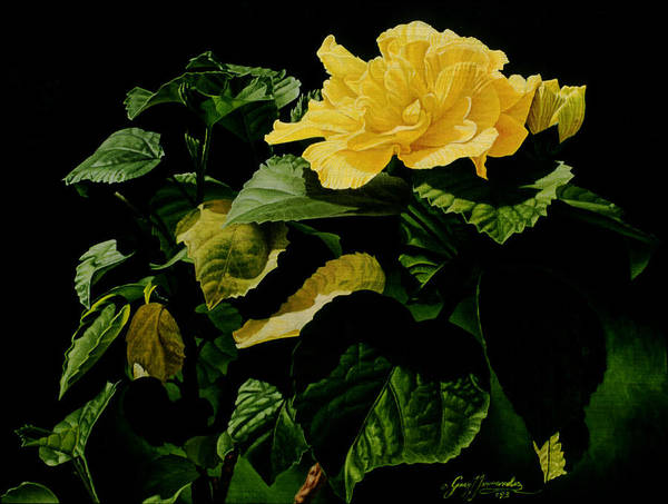 Floral Poster featuring the painting Yellow Hibiscus by Gary Hernandez