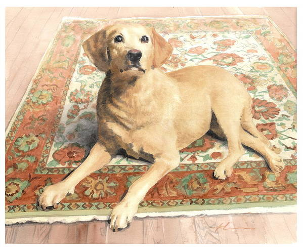 Miketheuer.com Yellow Lab On A Rug Watercolor Portrait Poster featuring the drawing Yellow Lab On A Rug Watercolor Portrait by Mike Theuer