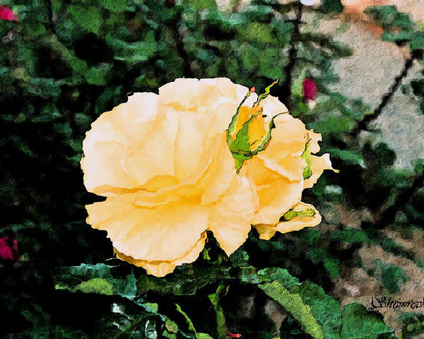 Rose Poster featuring the digital art Yellow Rose And Bud by Christopher Bage
