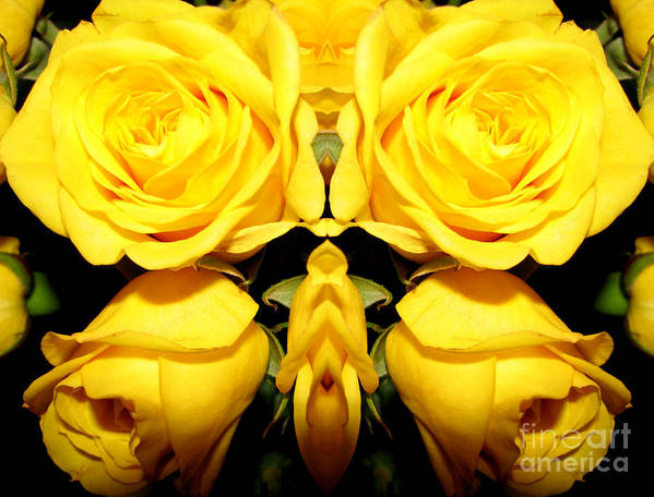 Roses Poster featuring the photograph Yellow Roses Mirrored Effect by Rose Santuci-Sofranko