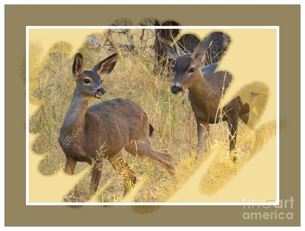 Black-tail Deer Poster featuring the photograph Yosemite National Park - Deer by Scott Cameron