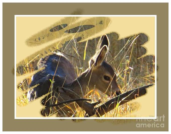 Black-tail Deer Poster featuring the photograph Yosemite Np Wildlife - Doe by Scott Cameron