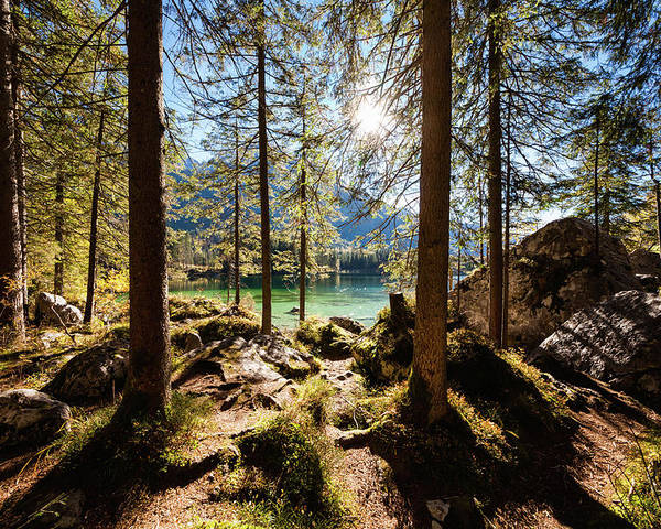 Tranquility Poster featuring the photograph Zauberwald In Autumn by Jorg Greuel