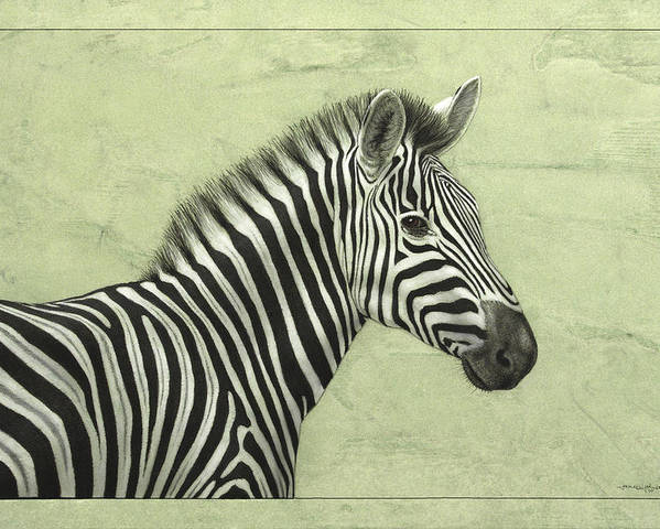 Zebra Poster featuring the painting Zebra by James W Johnson