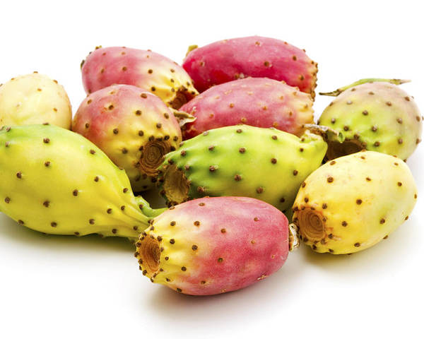 White Background Poster featuring the photograph Fruits Of Opuntia Ficus-indica by Fabrizio Troiani