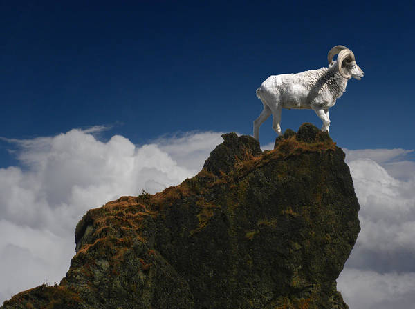 Mountain Sheep Poster featuring the photograph 1737 by Peter Holme III