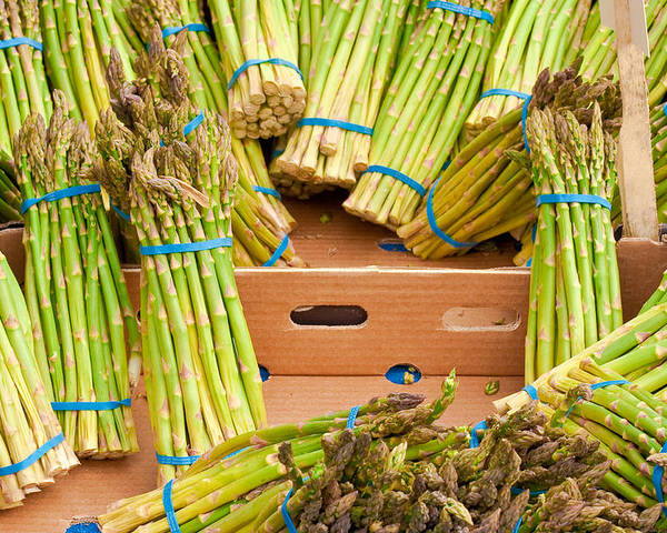 Asparagus Poster featuring the photograph Asparagus by Tom Gowanlock