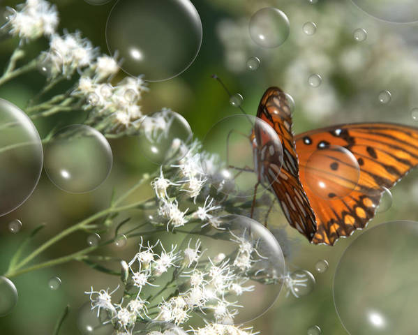 Butterfly Poster featuring the photograph Bubble Fly by Steven Richardson