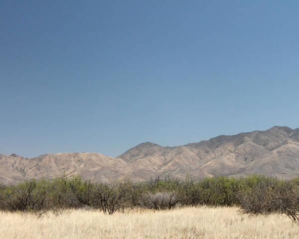 Desert Poster featuring the photograph Desert Beauty by Kathleen Nash