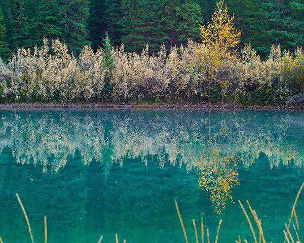 Nature Poster featuring the photograph Fall Reflections by Manju Shekhar