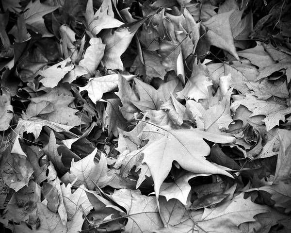 Autumn Poster featuring the photograph Fallen Leaves by Fabrizio Troiani