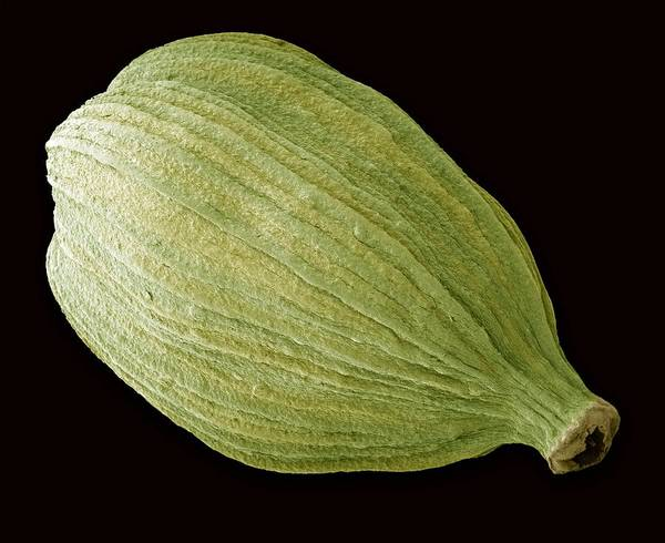 Green Cardamom Poster featuring the photograph Green Cardamom Pod, Sem by Steve Gschmeissner