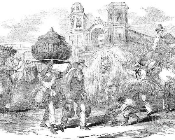 1853 Poster featuring the photograph Havana, Cuba, 1853 by Granger
