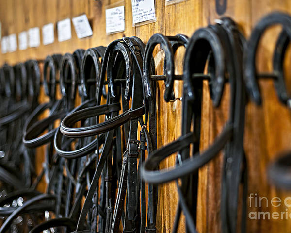 Bridles Poster featuring the photograph Horse Bridles Hanging In Stable by Elena Elisseeva