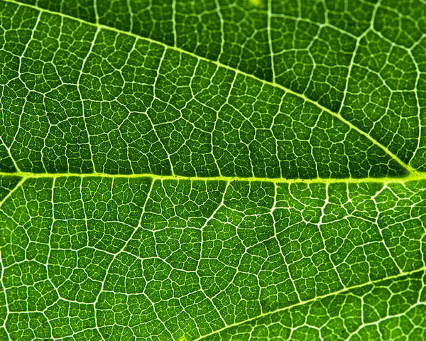 Macro Poster featuring the photograph Leaf by Fabrizio Troiani