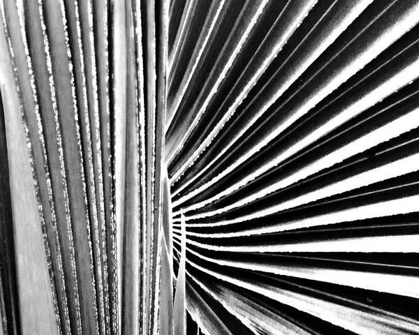 Palmetto Poster featuring the digital art Palmetto by Lizi Beard-Ward